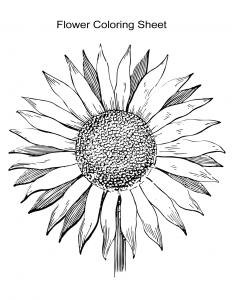 Flower Coloring Sheet 3