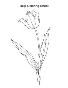 Flower Coloring Sheet Tulip