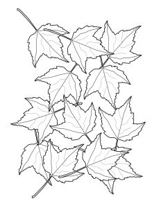 Falling Leaves Coloring Sheet