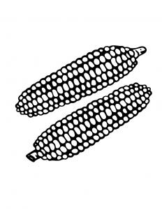 Corn Coloring Sheet